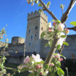 la torre, albero di pietra, fiorisce