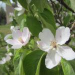 cortili in fiore
